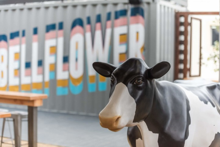 SteelCraft Bellflower interior container with Bellflower painted on the side, as well as a cow statue